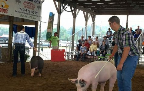 Bradley Sheppard and his pig, Ash. (Photo submitted by Cindy Sheppard.)