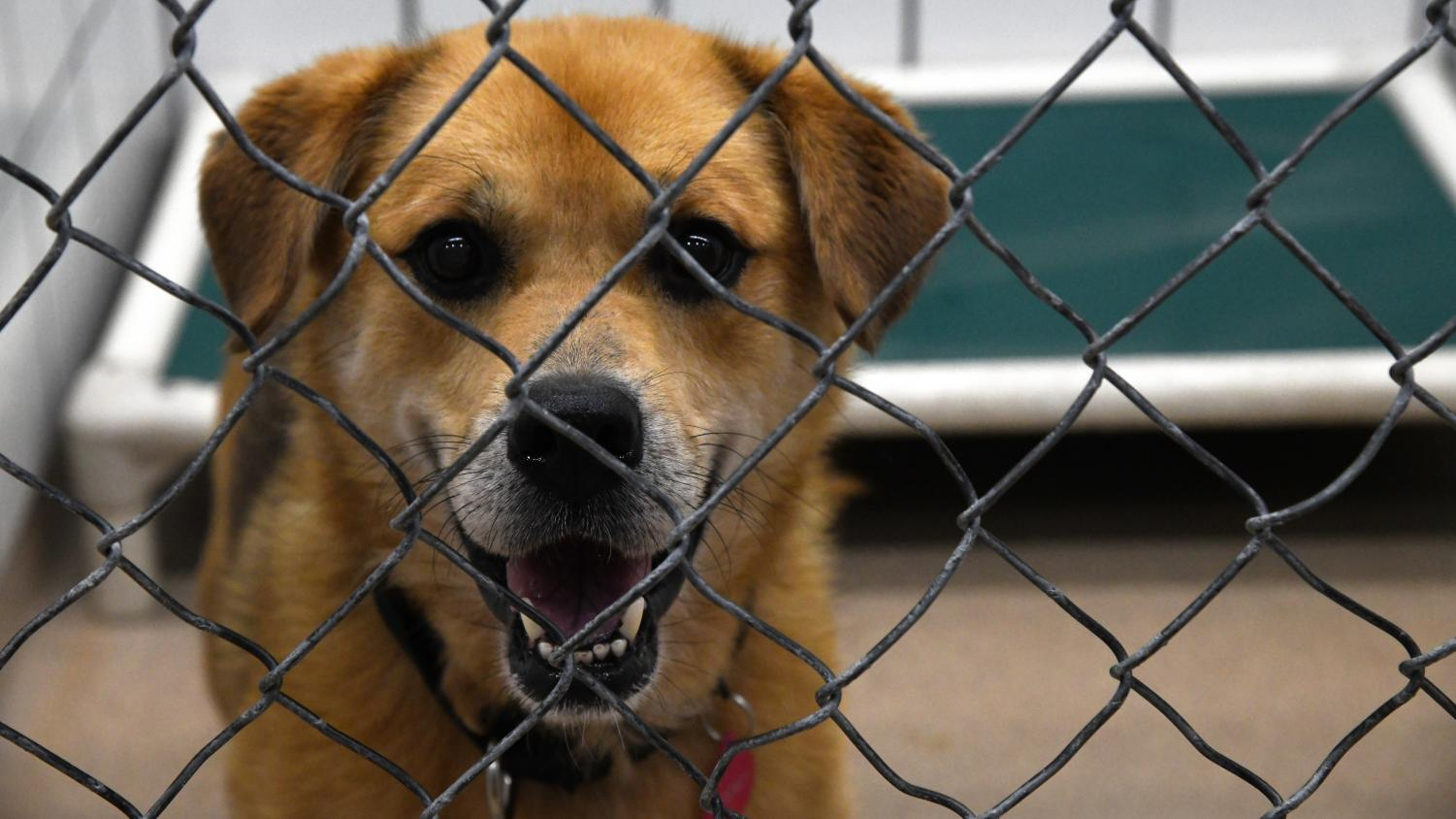 One of the many friendly, furry faces that were awaiting the Clear the Shelter event on Aug. 18, 2018.