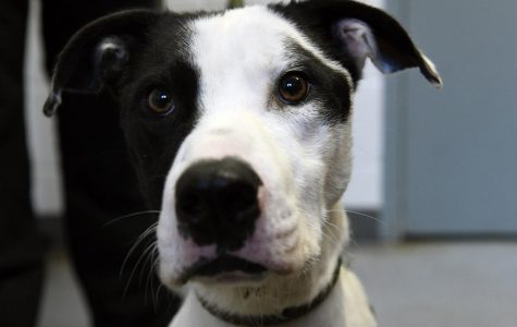Oreo was picked up by the Muskingum County Dog Warden and Adoption Center back in October.