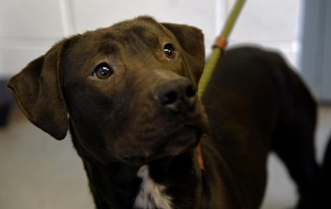 Bowser is available for adoption at the Muskingum County Dog Warden and Adoption Center.