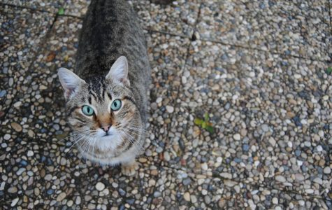 Spay, neuter clinic coming to Zanesville to help 'stop the litter cycle'
