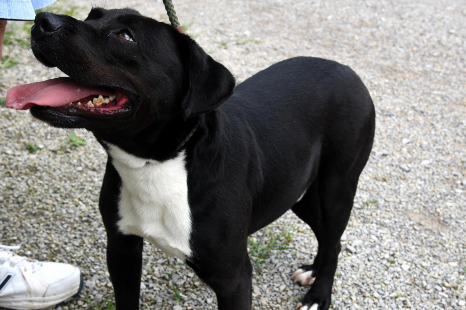 Prince was previously a featured furry friend in January, although he's making another debut as his first adoptive home wasn't the perfect fit.