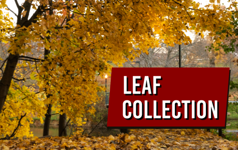 City sets leaf collection dates