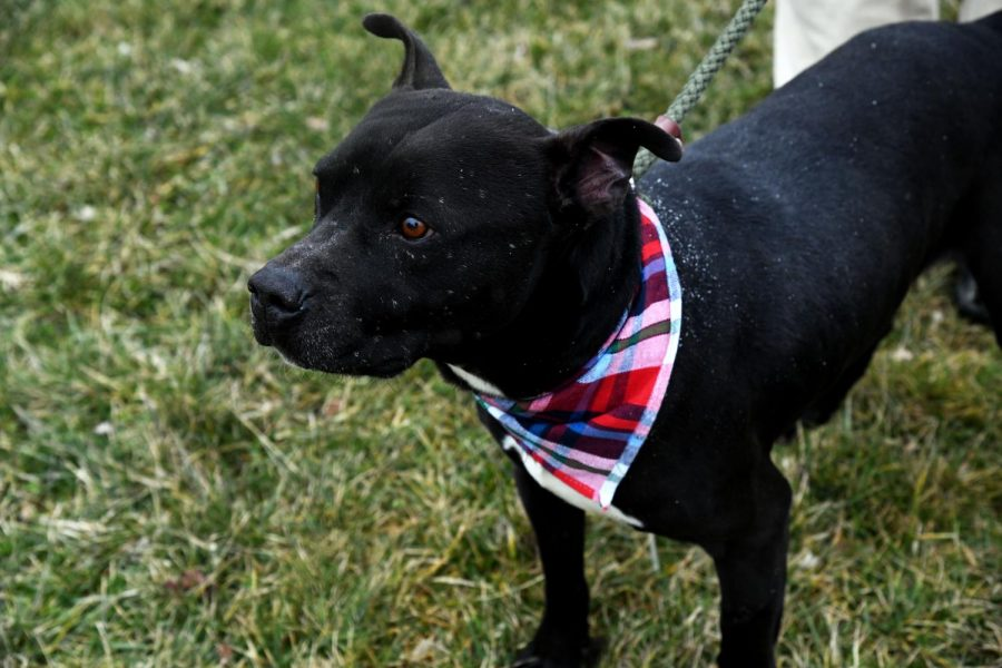 Furry Friend Friday: This former stray is looking for a more permanent arrangement